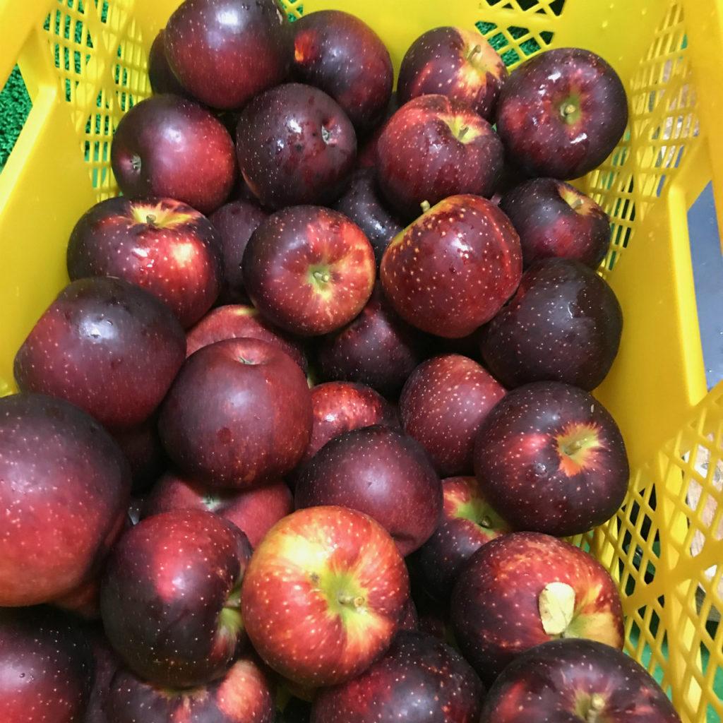 沢田のりんご
